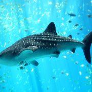 Biarritz Aquarium - Irish Rugby Tours, Rugby Tours To Biarritz
