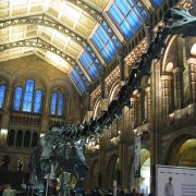 Natural History Museum Madrid -Irish Rugby Tours, Rugby Tours To Madrid