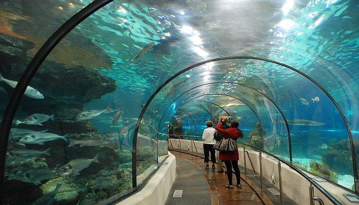 Barcelona Aquarium - Rugby Tours To Barcelona