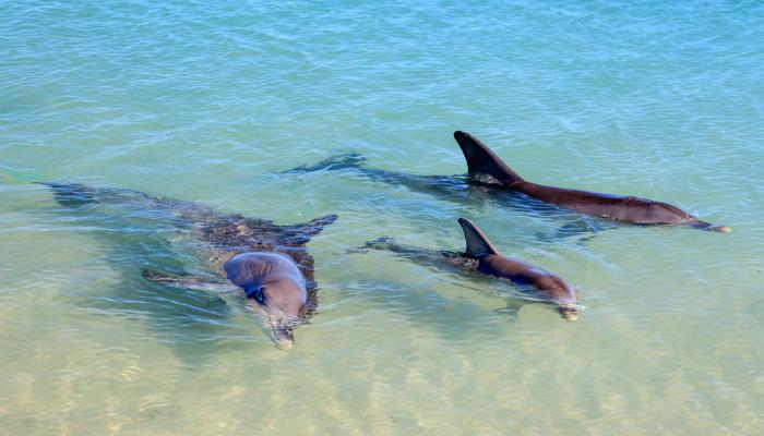 Dolphin And Whale Tours - Irish Rugby Tours To Faro, Rugby Tours To Faro