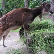 Gdansk Zoo - Rugby Tours To Gdansk, Irish Rugby Tours