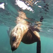 Snorkeling with Seals - Rugby Tours To South Africa, Irish Rugby Tours
